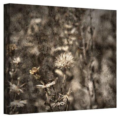 ArtWall ''Dormant'' by Mark Ross Photographic Print on Ca...