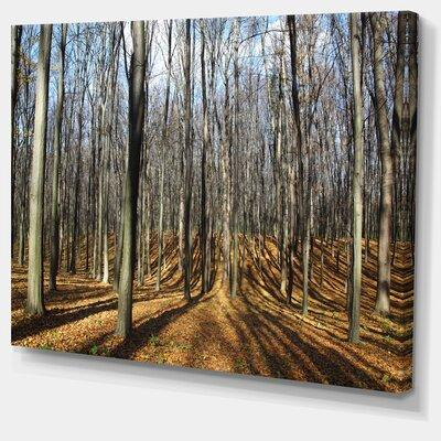 DesignArt 'Shade from Sun in Autumn Forest' Photographic ...