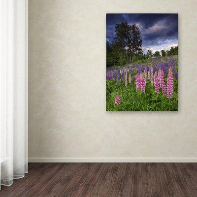 Trademark Art 'Lupines on the Hill' by Michael Blanchette...