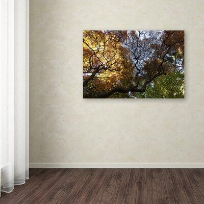 Trademark Art 'Under a Japanese Maple Tree' Photographic ...