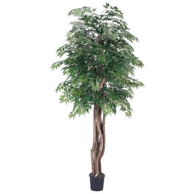 Vickerman 319321 - 6' Ming Aralia Executive (TEX0660-07) ...